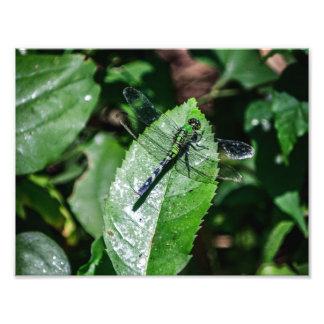 Verde Impressão De Foto