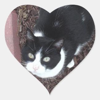 Verde preto e branco bonito etiquetas Eyed do gato Adesivo Coração