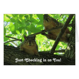 Verificando dentro, cartão da amizade dos esquilos