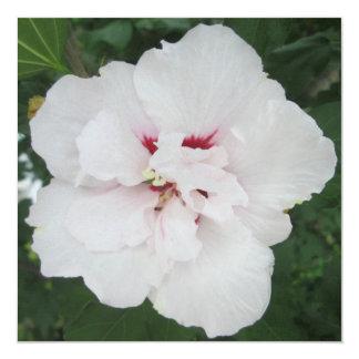 Vermelho branco cor-de-rosa de Sharon Convite Quadrado 13.35 X 13.35cm