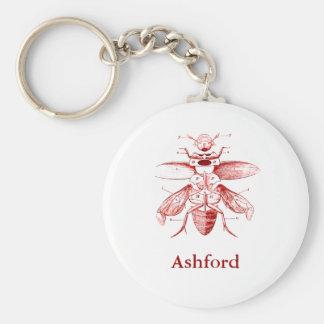 Vermelho dos besouros | da imagem | do inseto do chaveiro