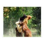 Vermelho e tango no jogo cartão postal