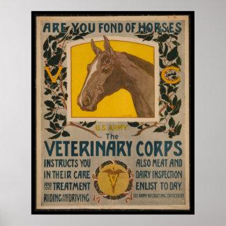 Veterinário do VINTAGE WW1. POSTER do corpo Pôster
