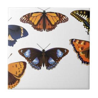 Vetor das borboletas azulejo