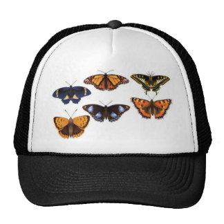Vetor das borboletas bones