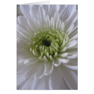 Vida em cartões da flor (2)