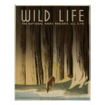 Vida selvagem os parques nacionais preservam toda  pôsteres