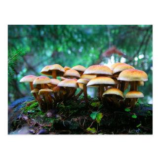 vila do cogumelo cartão postal