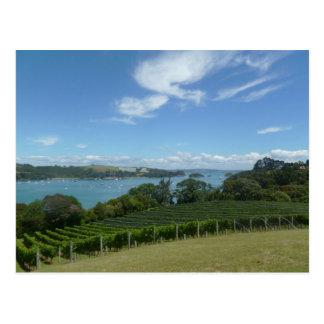 Vinhedo em Nova Zelândia Cartão Postal