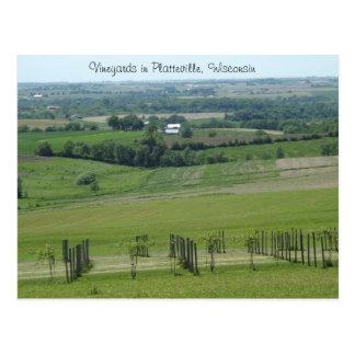 Vinhedos em Platteville, cartão de Wisconsin