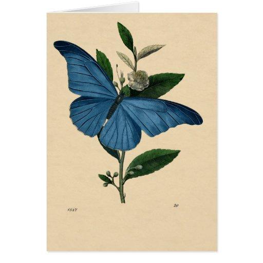 Vintage Blau Schmetterling, feliz aniversario Cartão