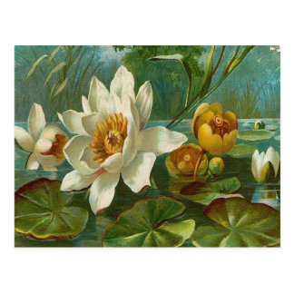 Vintage, flor aquática, aniversário da esposa cartão postal