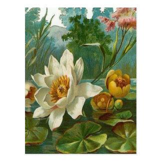 Vintage, flor aquática, aniversário da esposa cartao postal