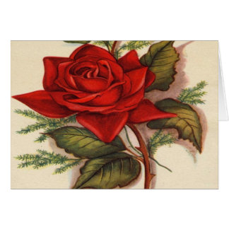 Vintage, rosa vermelha, aniversário da esposa cartão comemorativo