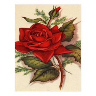 Vintage, rosa vermelha, aniversário da esposa cartão postal