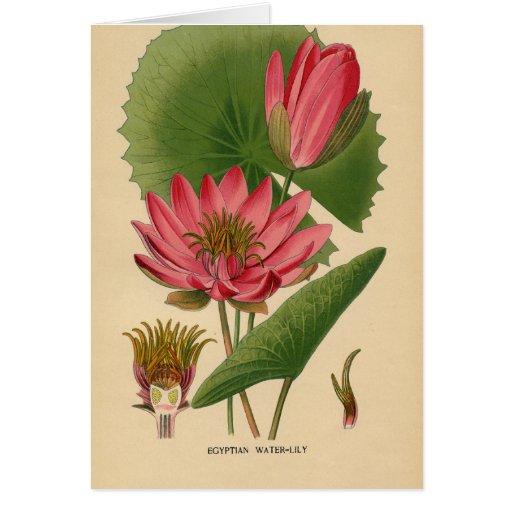 Vintage Waterlily, aniversário alemão Cartao