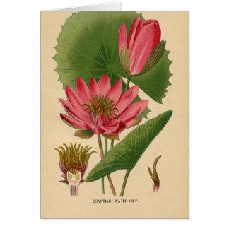 Vintage Waterlily, aniversário alemão Cartão Comemorativo