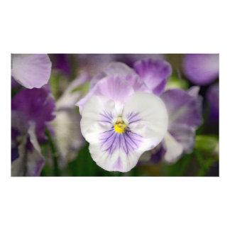 Violas roxas e brancas foto artes