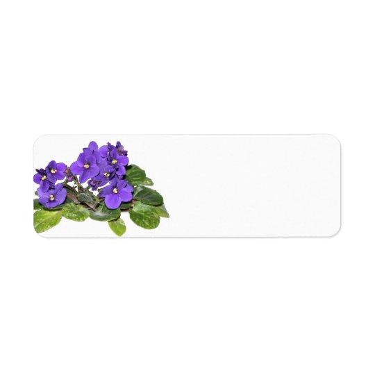 Violeta africana etiqueta endereço de retorno