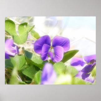 Violeta bonita do primavera impressão