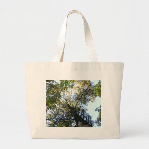 Vista acima nas árvores bolsa para compra