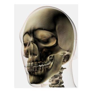 Vista tridimensional do crânio e dos dentes cartoes postais