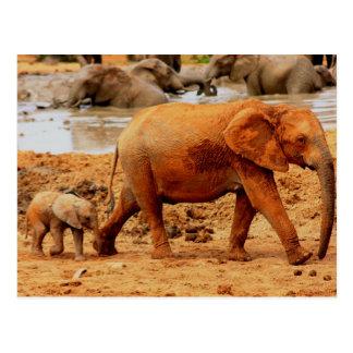 vitela e elefante recém-nascidos cartões postais