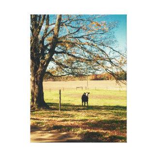 Vitela no pasto por uma árvore alaranjada grande impressão em tela
