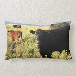 Vitela vermelha bonito & rebanho de vacas das vite travesseiros
