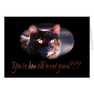 Você é como cartão de aniversário velho do gato do