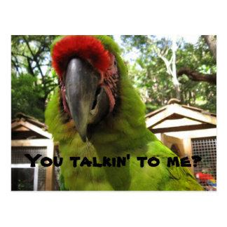 """""""Você talkin a mim?"""" papagaio, cartão"""