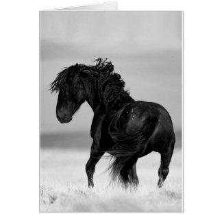 Voltas selvagens do garanhão - cartão do cavalo