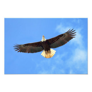 Voo de Eagle Impressão De Foto