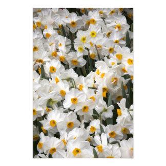 WA, vale de Skagit, teste padrão do Daffodil Fotografia