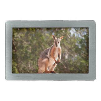 Wallaby de rocha amarelo-footed australiano