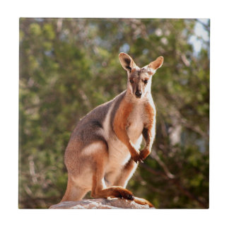 Wallaby de rocha amarelo-footed australiano