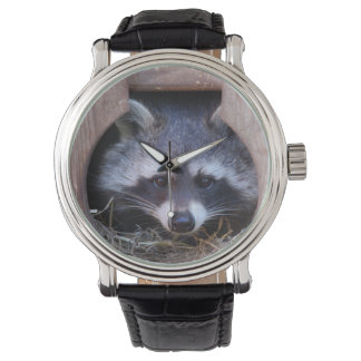 Watch ~ relógio de guaxinim