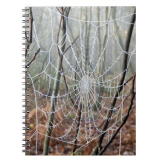 Web do caderno europeu da foto da aranha de jardim