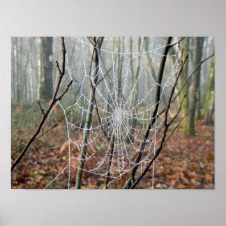 Web do poster europeu da aranha de jardim