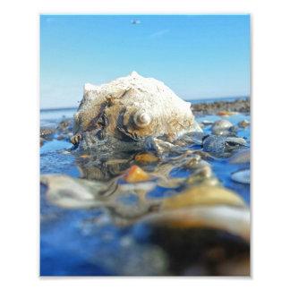 Welk na água impressão de foto