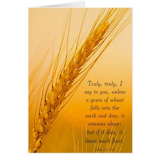 WheatSun Cartao
