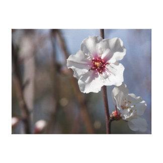 White flower in natural light impressão em tela