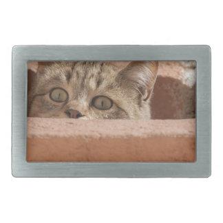 Wildcat novo curioso da atenção dos olhos de gato