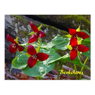 Wildflower do Trillium vermelho de Berkshires Cartão Postal
