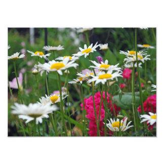 Wildflowers Fotos