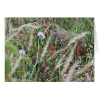 Wildflowers, cartão das colinas de Surrey