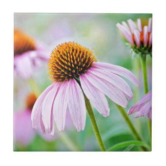 Wildflowers roxos