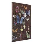 Wilhelm von Kaulbach - borboletas Impressão De Canvas Esticada