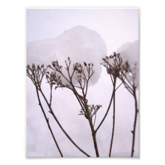 Winetr, plantas na foto do profissional da neve