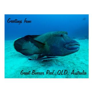 Wrasse maori no grande cartão do recife de coral